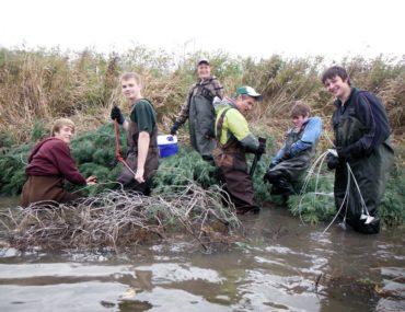 Stream restoration using Christmas trees