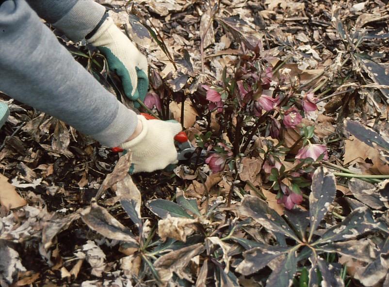 frankie-flowers-prune