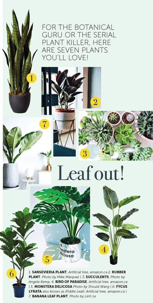 The Benefits of Decorating with Plants