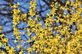 Prepare Your Garden for Spring Planting
