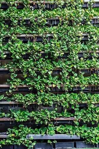 Top Tips for Vertical Gardening